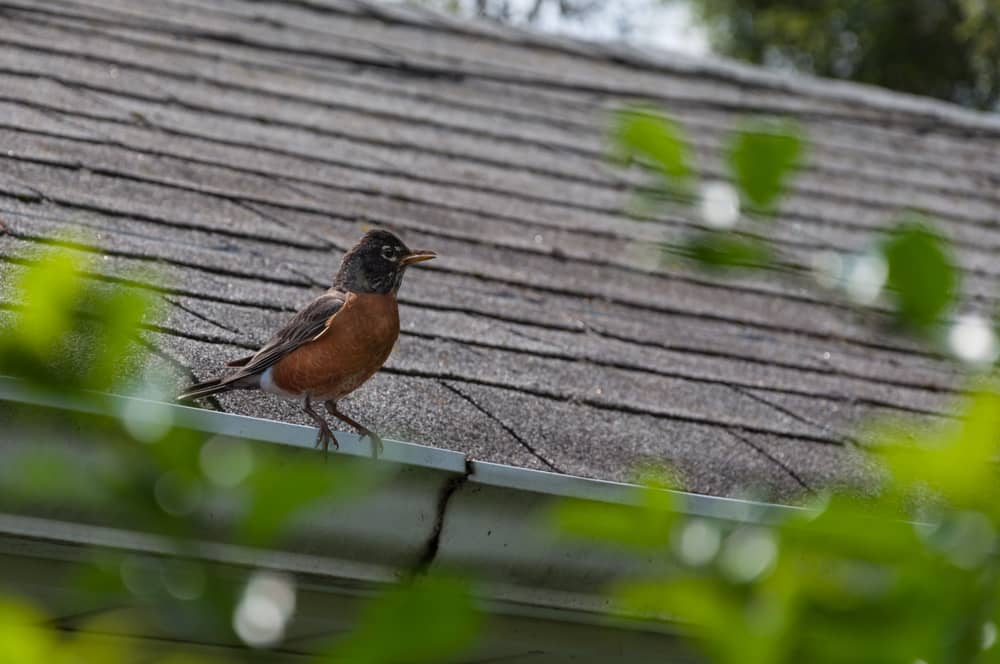 Bird sitting on a roof in springtime