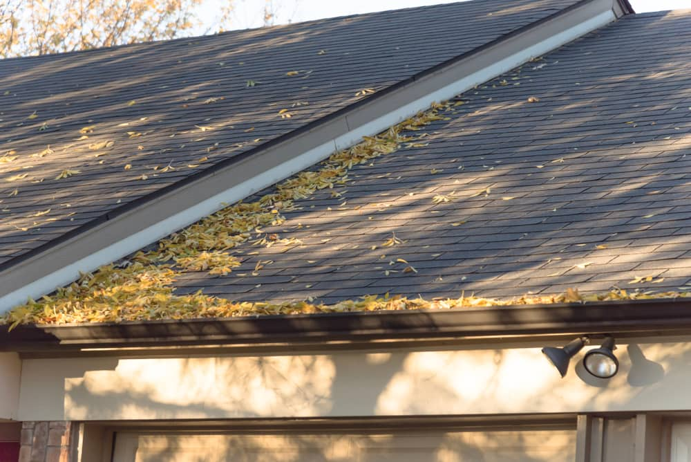 Tree leaves on the roof of a house