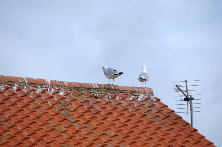 two-white-aseagulls in a roof